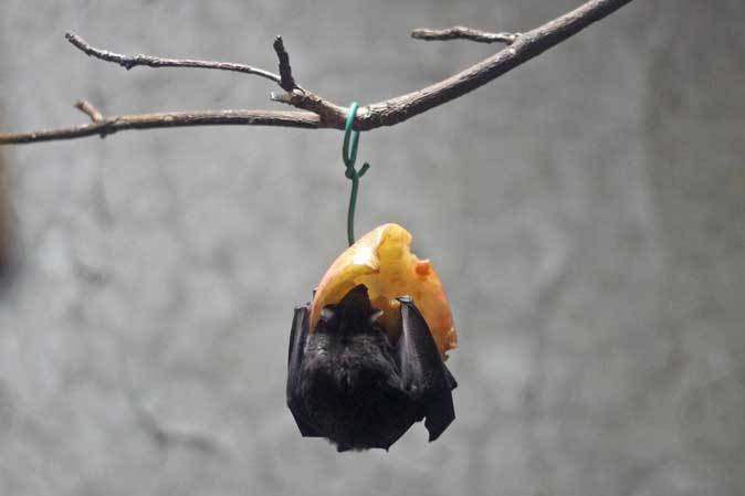 上野・真夏の夜の動物園2019⑥~明るい小獣館B1:カヤネズミと闇夜のハシビロコウ_b0355317_21562038.jpg