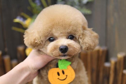 10月11日にご来店のワンちゃんです!!_b0130018_08532851.jpg