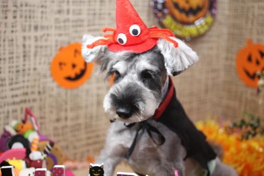 10月11日にご来店のワンちゃんです!!_b0130018_08591853.jpg