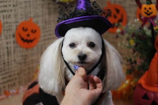 10月13日にご来店のワンちゃんです!!_b0130018_09251176.jpg