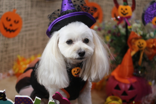 10月13日にご来店のワンちゃんです!!_b0130018_09252225.jpg