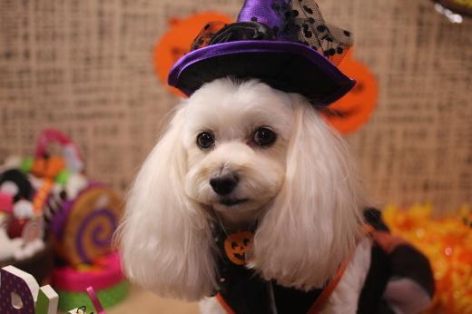 10月13日にご来店のワンちゃんです!!_b0130018_09253832.jpg