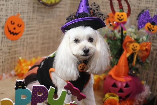 10月13日にご来店のワンちゃんです!!_b0130018_09254747.jpg