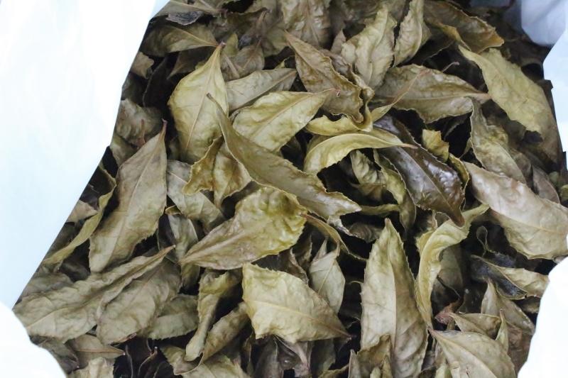 キレイな茶葉と、やる気はチャの木から_b0220318_05584792.jpg