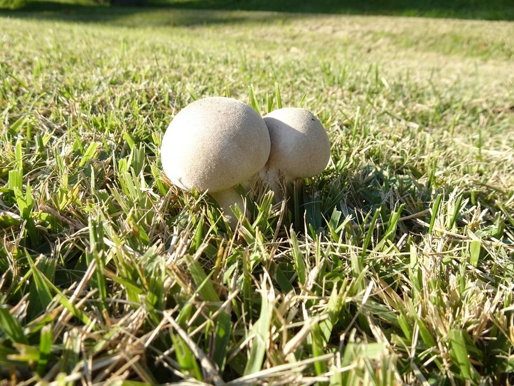 グラウンドゴルフ準備_c0111229_20060983.jpg
