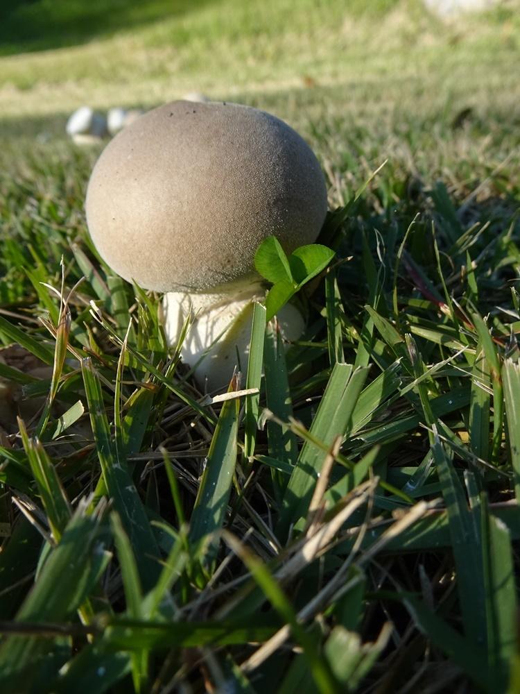 グラウンドゴルフ準備_c0111229_20061906.jpg
