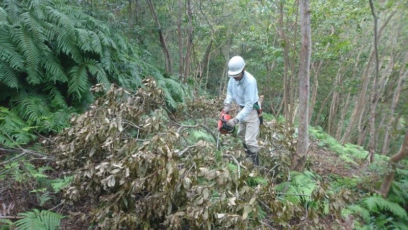 アサギマダラの飛来と林道整備_c0239329_17510477.jpg