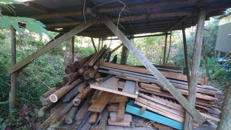 アサギマダラの飛来と林道整備_c0239329_17510687.jpg