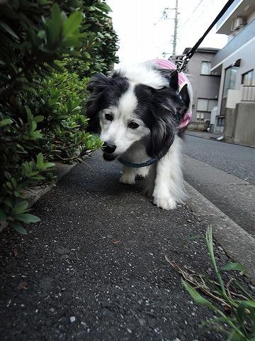散歩屋日誌【19】_c0062832_13144705.jpg