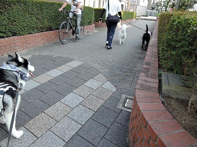 散歩屋日誌【19】_c0062832_13144751.jpg