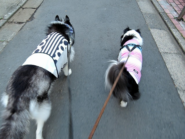 散歩屋日誌【19】_c0062832_13144797.jpg
