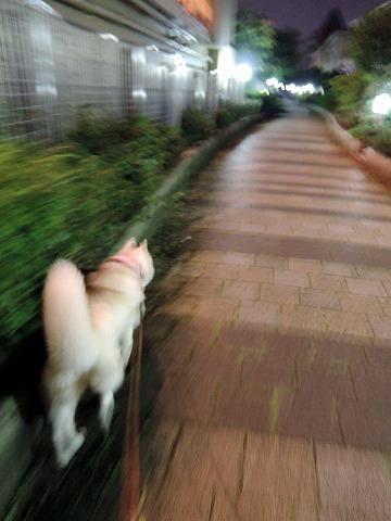 散歩屋日誌【19】_c0062832_13241584.jpg