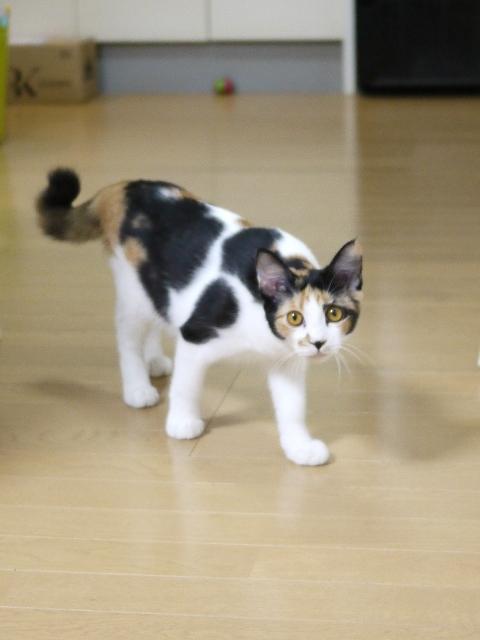 猫のお留守番 小麦ちゃん編。_a0143140_20070895.jpg