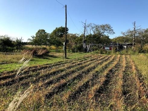 日日庵2019/収穫→ 脱穀_c0189970_08394833.jpg