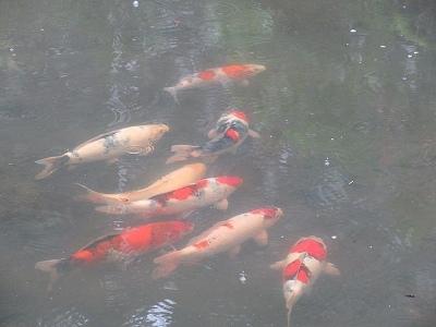 人間ドック   鮭のつかみ取り   ピアノ発表会_b0092684_15453612.jpg