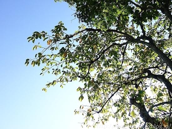 秋の庭しごと 宿根草と低木の植えつけ_c0293787_17410390.jpg