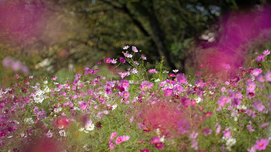 秋本番を宣言する花たち_d0353489_17361308.jpg