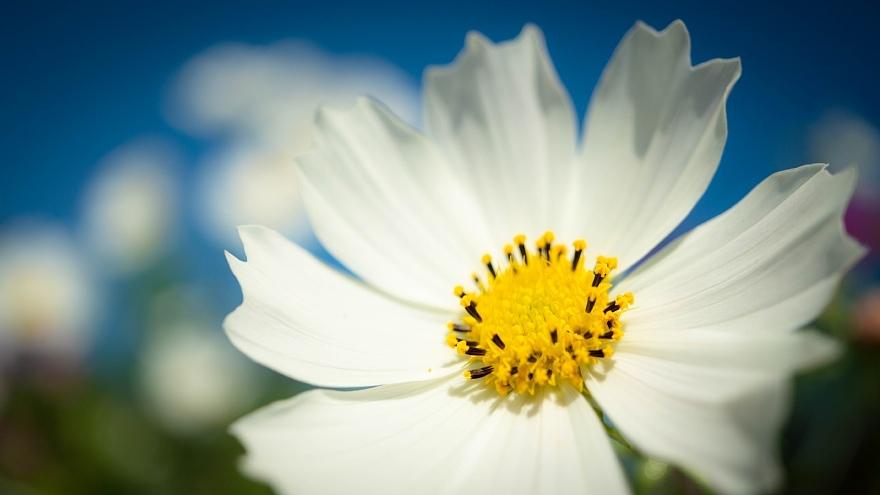 秋本番を宣言する花たち_d0353489_17362993.jpg