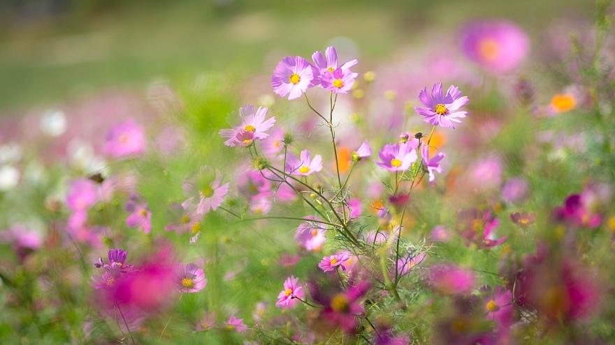 秋本番を宣言する花たち_d0353489_17371786.jpg