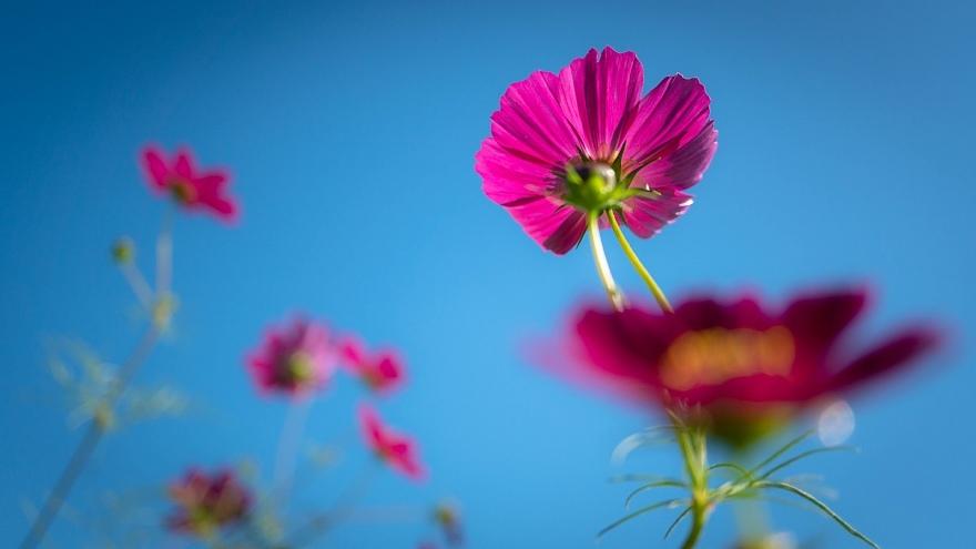 秋本番を宣言する花たち_d0353489_17375628.jpg