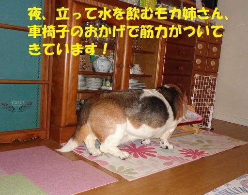 f0121712_00111447.jpg