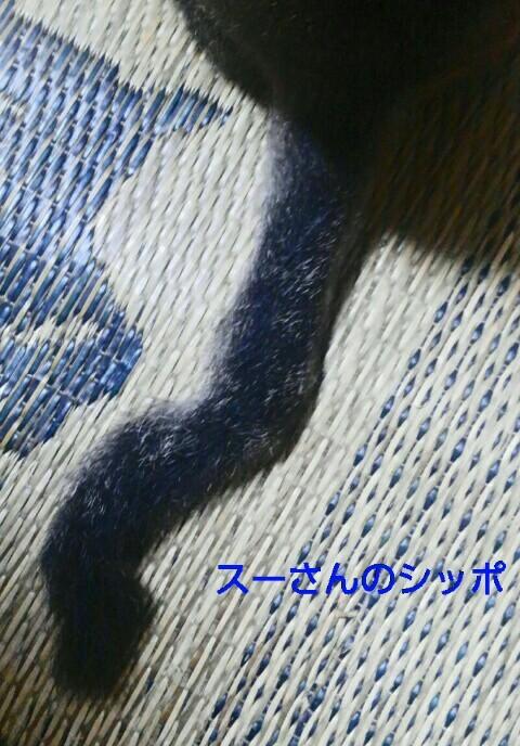 『vol.3869 シッポ』_e0040714_07262709.jpg