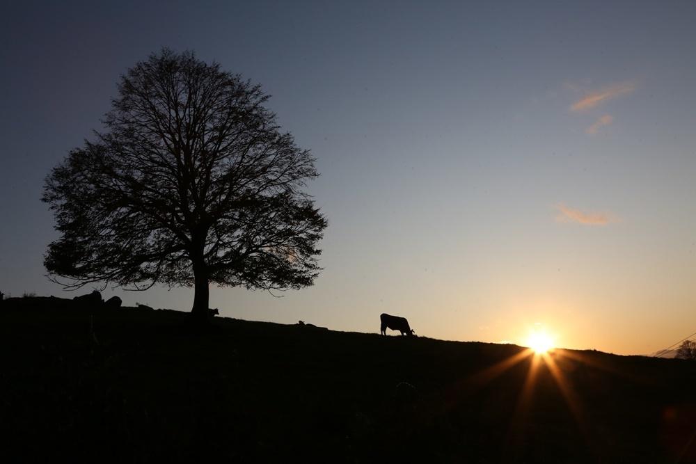 今日の朝夕景とグラウンドゴルフ_c0111229_18554403.jpg