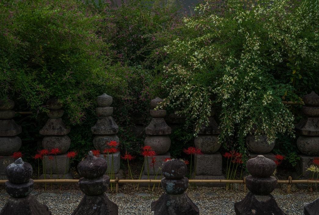 元興寺に咲く彼岸花と萩_e0363038_13490856.jpg