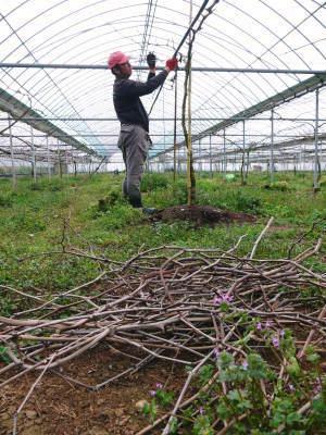 熊本ぶどう 社方園 収穫を終えたぶどう園にお礼肥えです!鹿本農業高校から来た実習生と共に(2019)前編_a0254656_16545142.jpg