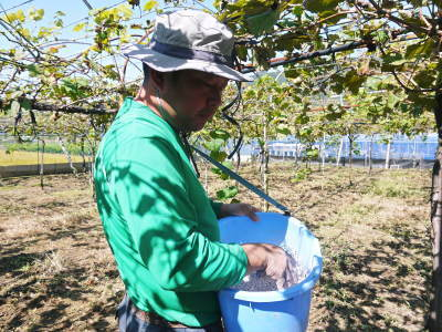 熊本ぶどう 社方園 収穫を終えたぶどう園にお礼肥えです!鹿本農業高校から来た実習生と共に(2019)前編_a0254656_17231704.jpg