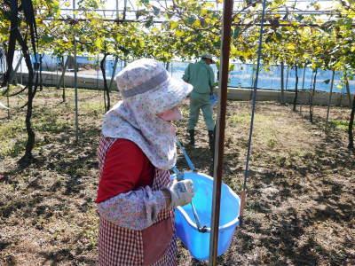 熊本ぶどう 社方園 収穫を終えたぶどう園にお礼肥えです!鹿本農業高校から来た実習生と共に(2019)前編_a0254656_17482834.jpg