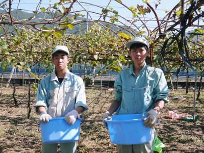 熊本ぶどう 社方園 収穫を終えたぶどう園にお礼肥えです!鹿本農業高校から来た実習生と共に(2019)前編_a0254656_17522472.jpg