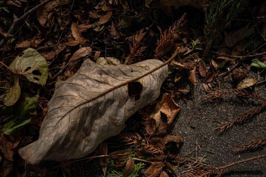 2019/10/16 鬼怒川温泉、川治温泉、そして日光へ_b0171364_00331995.jpg
