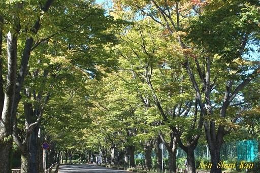 初秋の植物園  2019年10月10日_a0164068_23091035.jpg