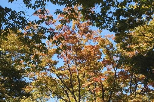初秋の植物園  2019年10月10日_a0164068_23091049.jpg