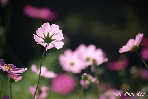 初秋の植物園  2019年10月10日_a0164068_23102398.jpg