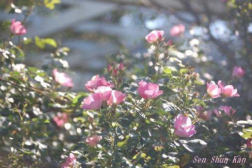初秋の植物園  2019年10月10日_a0164068_23141322.jpg