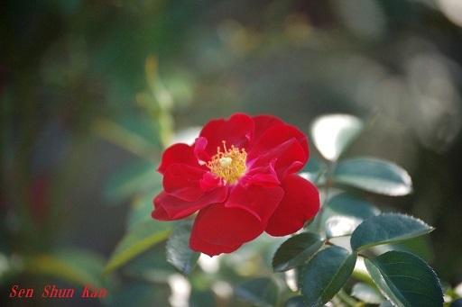 初秋の植物園  2019年10月10日_a0164068_23141360.jpg