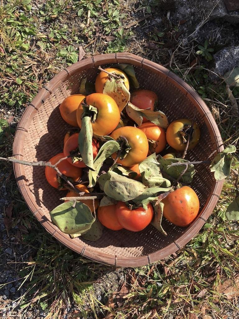 心地よい秋の日に 〜ジャンボ干し柿を作りながら〜_c0334574_19330459.jpg