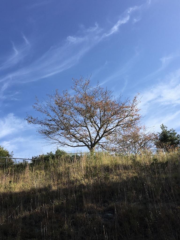 心地よい秋の日に 〜ジャンボ干し柿を作りながら〜_c0334574_19332593.jpg