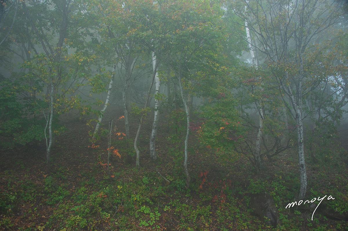 霧の高原_c0085877_05590315.jpg