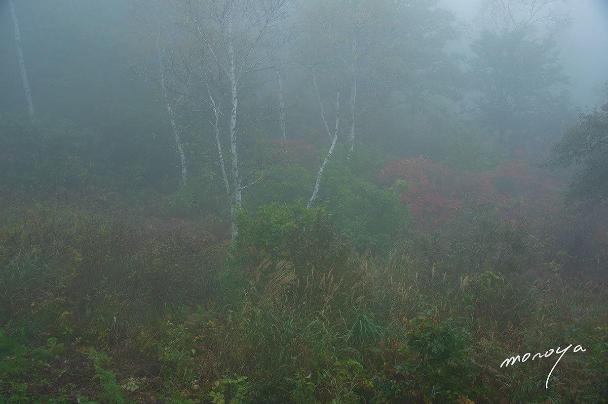 霧の高原_c0085877_05591090.jpg