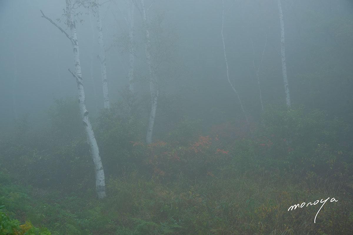 霧の高原_c0085877_05591654.jpg