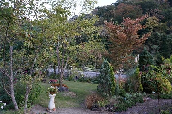 今日のお庭_e0365880_21082732.jpg