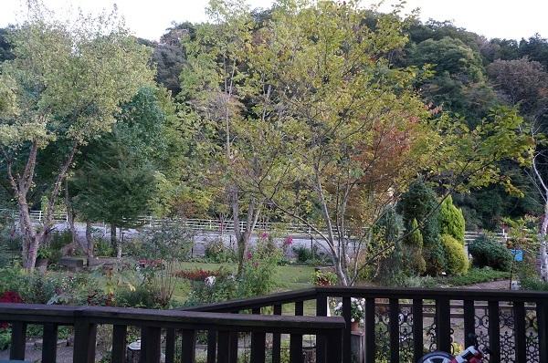 今日のお庭_e0365880_21083402.jpg