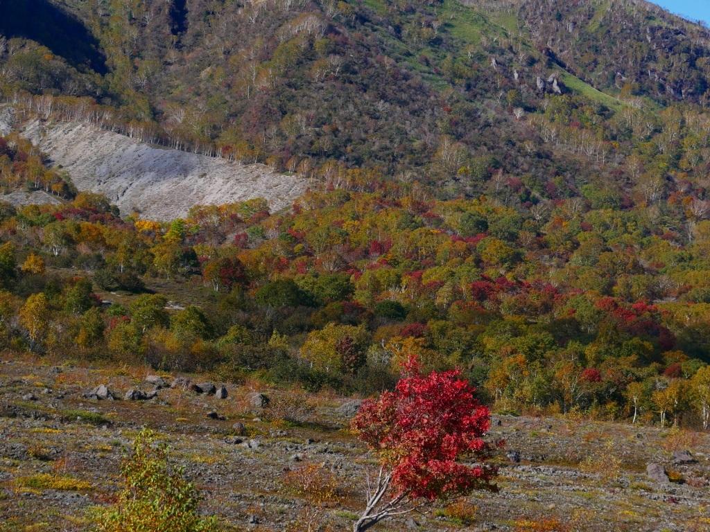 紅葉がそろそろ見頃?の樽前山、2019.10.15_f0138096_10194019.jpg