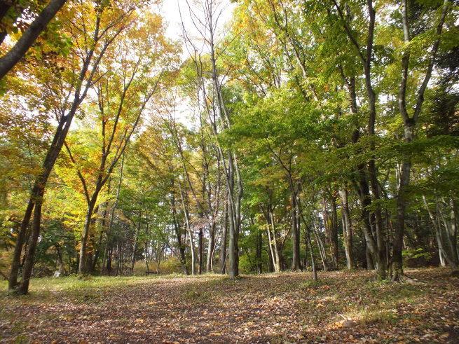秋の森のスピリチュアルティーチング「癒しの心」_f0006208_14052179.jpg