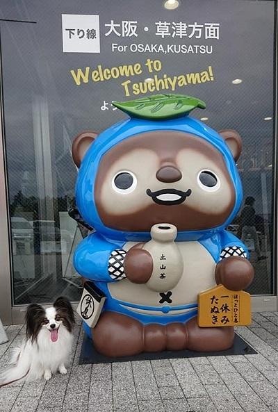 タヌキ顔_e0190220_23174789.jpg