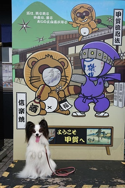タヌキ顔_e0190220_23180844.jpg