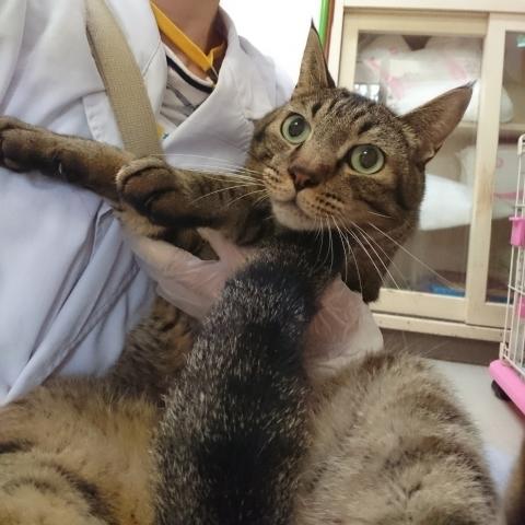 10/15 センターレポート【猫編】PART2_f0078320_00291671.jpg